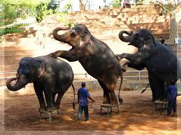 Zoologic gardens Colombo