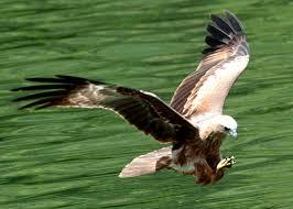eagle Langkawi