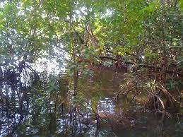 Eco tourisme dans les mangrove de Goa
