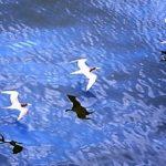 Croisière tour du monde Austral 2017 Escale à Rio de Janeiro vol en formation au raz de l'eau