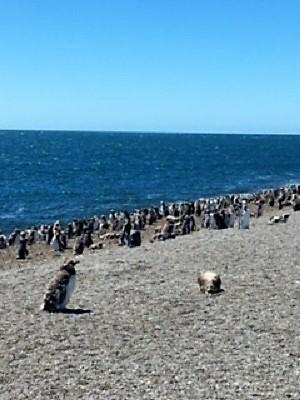 Croisière tour du monde Austral 2017 JC Le Costa Luminosa fait escale à Puerto Madryn