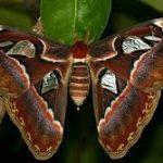 Escale à Aruba élevage de papillons