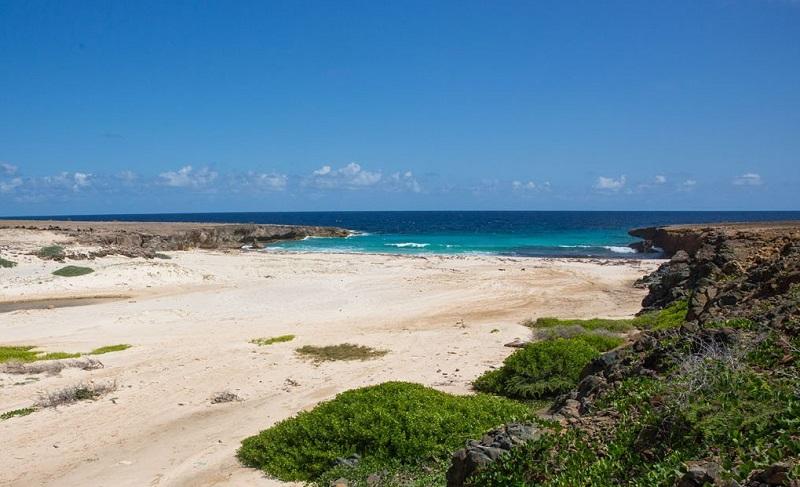 scale à Aruba Daimari Beach
