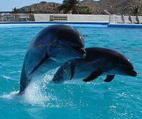 Excursion Costa Cabo San Lucas rencontre avec les dauphins