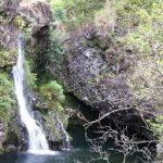 Escale à Honolulu  forêt tropicale hawaïenne