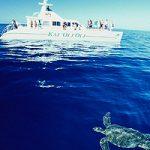 Escale à Honolulu  snorkel