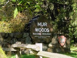 Excursion Costa Croisière à San Francisco Muir Woods