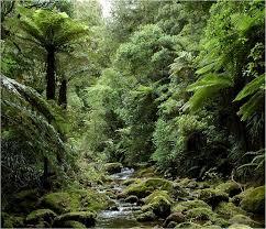 Escale Tauranga Nouvelle-zelande Forest Park Kaimai Mamaku