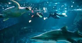 Aquarium Perth AQWA