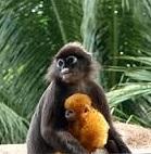 Ile aux singes Langkawi