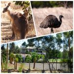 Claudine et Jean Luc 2 jours d'escale à Melbourne en Australie