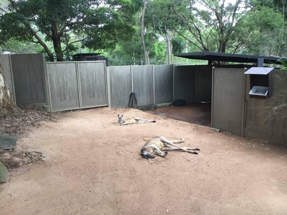Croisière tour du monde Australe 2017 Anna visite du parc animalier et des kangourous