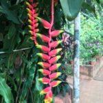 Jacques Charles et le Costa Luminosa en Escale à Goa en Inde