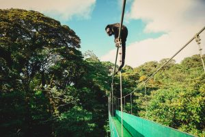 Excursion Forest Sky Walk