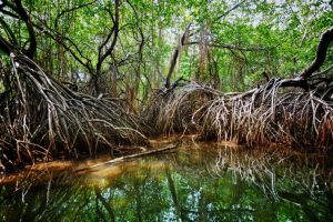 Tropical Mangrove Eco Tour Puntarenas Costa Rica