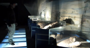 Le musée de paléontologie de Trelew