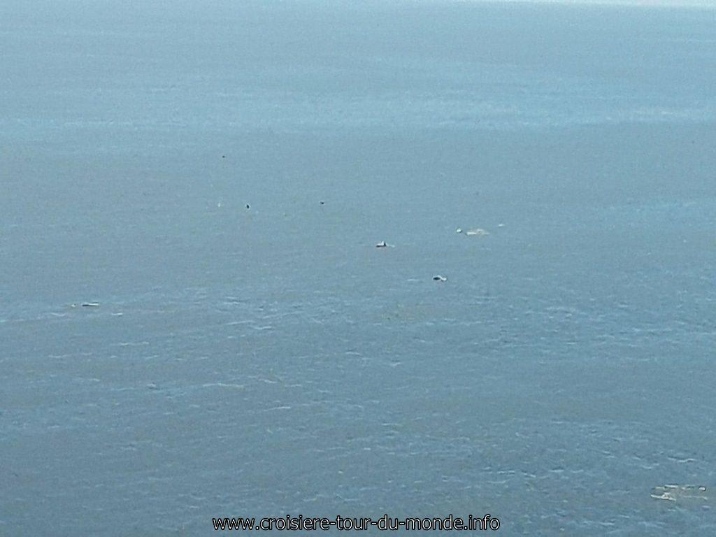 Vie à bord du Queen Victoria vue sur un banc de dauphin