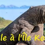 Escale à l'Île Komodo en Indonésie 2