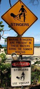 Méduses ou Stingers en Australie