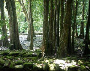 Le Marae Titiroa à Moorea