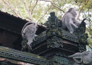 Croisière tour du monde La forêt de Singe d'Ubud à Bali