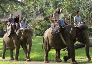 Croisière tour du monde Mason Elephant Park & Lodge à Bali