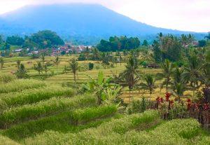 Croisière tour du monde les rizières de Jatiluwih à Bali