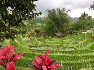 Croisière tour du monde visite de Rizières à Bali