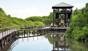 Croisière tour du mondela forêt de mangroves de Ngurah Ra de Bali