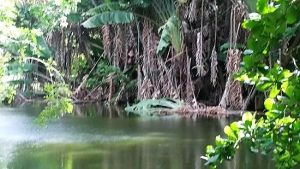 Croisière tour du monde Curepipe Botanic Garden Port Louis île Maurice