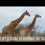 Escale 34 Croisière tour du monde à Port Elisabeth en Afrique du Sud